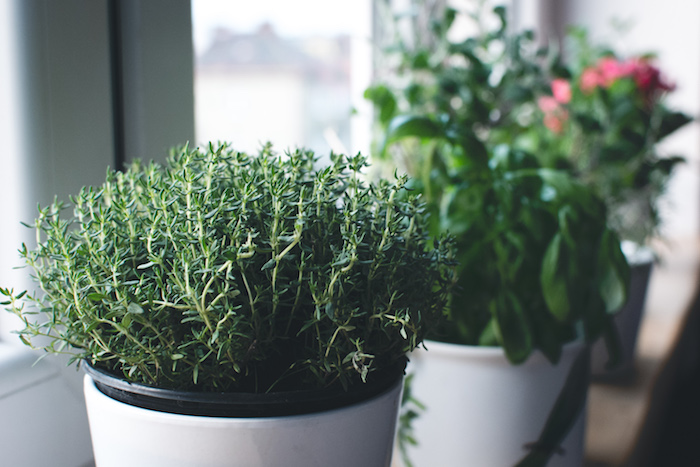 herbs to grow at home