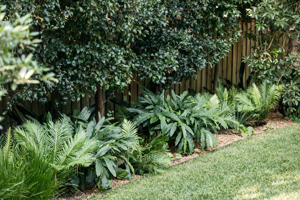 Avoid cutting your lawn too short if you want lush, green turf this summer | Garden: Fig Landscapes