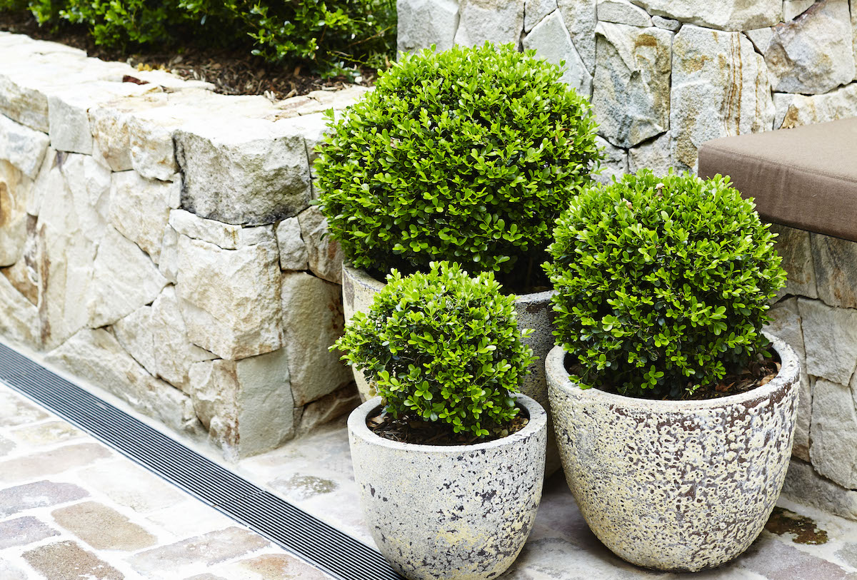 A collection of pots is a easy way to add interest to any outdoor space
